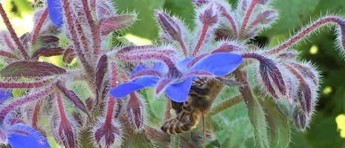 Projekt Gesamtbetriebliche Biodiversitätsberatung (GBB) – Kommunikation und Bildung